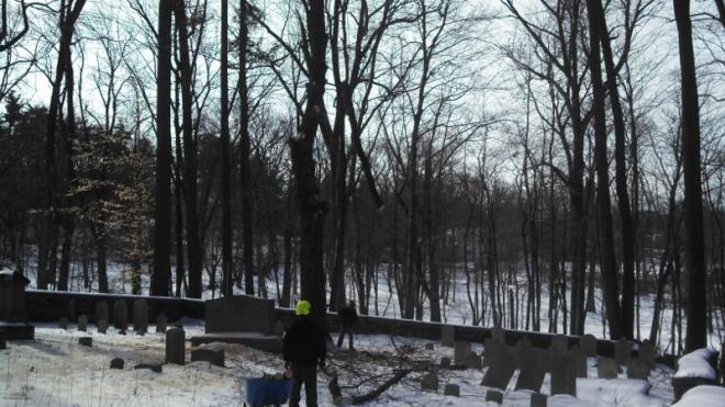 Lowering a maple limb